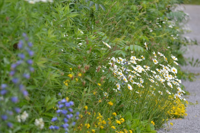 Road side wild flowers
