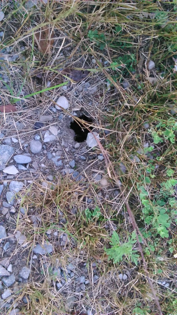 We are pretty sure the baby turtles clamored out of this hole