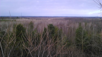 View from the hill, no leaves to be seen on the trees