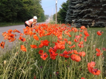 Glenis having a good look at these beautiful poppies.